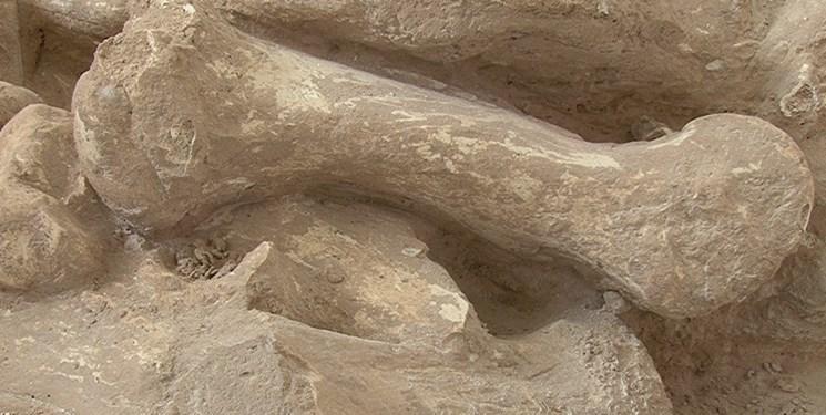 نخستین انسان ها صدهزار سال قبل از راه رسیدند