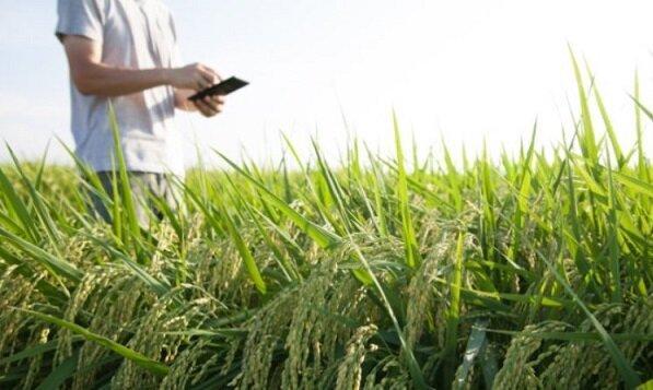 پرداخت 58 میلیارد تسهیلات بانکی ارزان قیمت به کشاورزان سیل زده لرستان