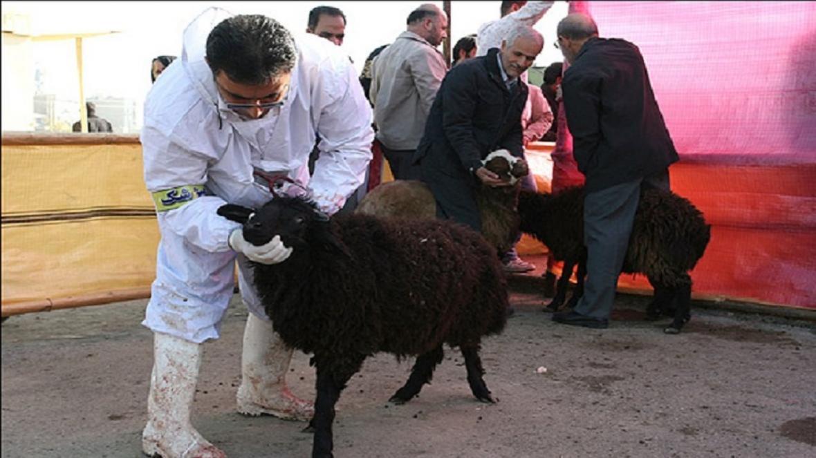 قربانی عید قربان در کشتارگاه ها انجام می گردد