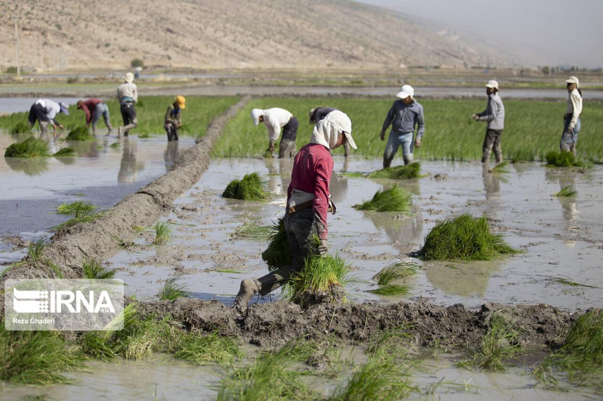خبرنگاران 25 درصد اشتغال کشور در اختیار بخش کشاورزی
