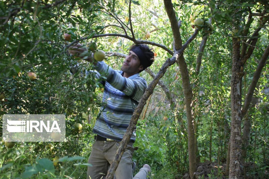 خبرنگاران توسعه باغ های خوزستان با نهال اصلاح شده امکان پذیراست